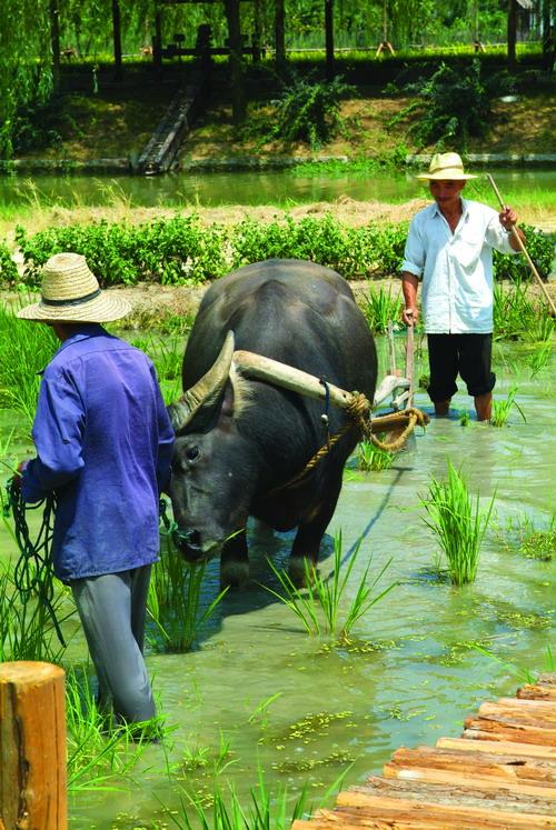 华庄追求与游客的互动性,游客可在园区观光 ,采摘,观看动物表演,走