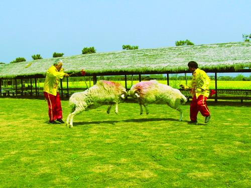 在芦漾垂钓中凌 波垂趣,动物表演场观看斗鸡/ 斗羊表演,童趣园攀爬荡